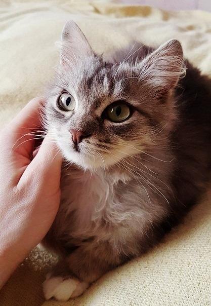 Спасение котенка Дело было 3 января 2017 года. Россиянин Слава ехал по той же дороге, что и сотни автомобилистов до него. Он обратил внимание на темный, припорошенный снегом, комок. И, в отличие