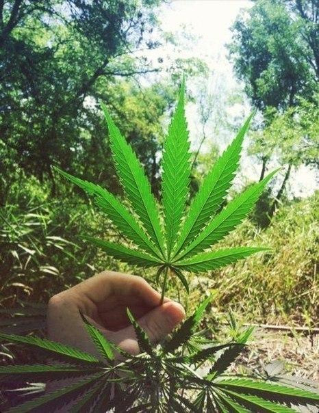 Пропитала подъездов и стены марихуана только мама png марихуана