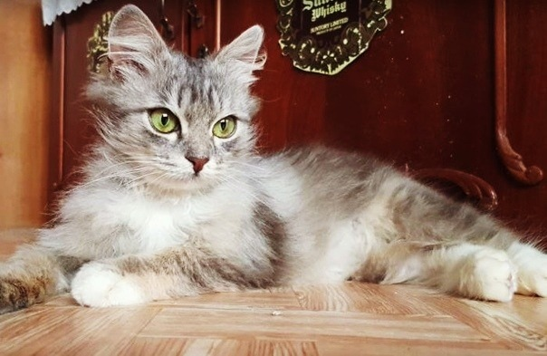 Спасение котенка