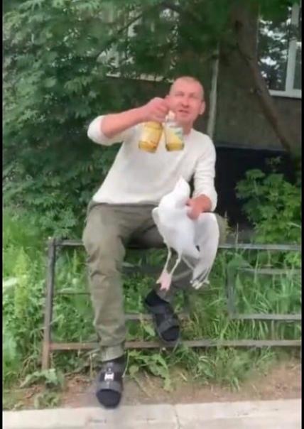 В Мурманске мужчина выбрал чайку в качестве собутыльника Отпускать птицу он отказался, несмотря на многочисленные просьбы