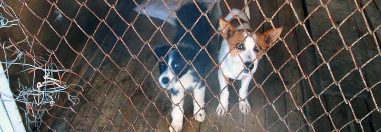 Деятельность по обращению с бездомными животными
