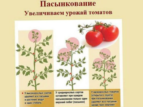 Что нужно знать при выращивания томатов чтобы получить хороший урожай помидор