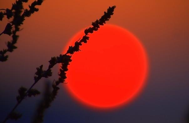 Красное солнце: народные приметы, к чему снится.