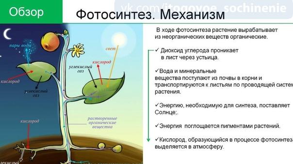 фотосинтез механизм процесса является одной