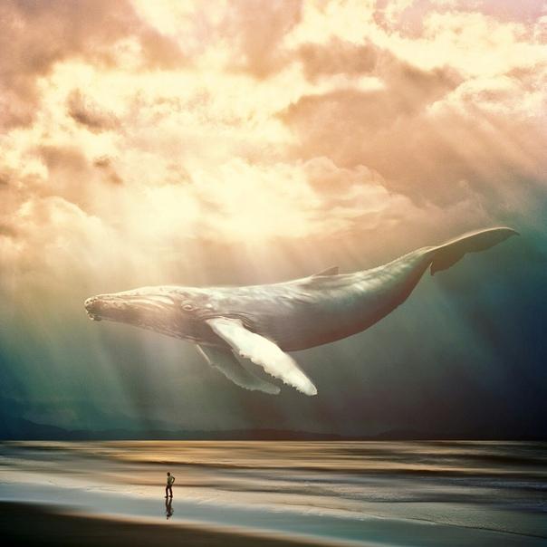 этому картинки с китами в небе озк это строго