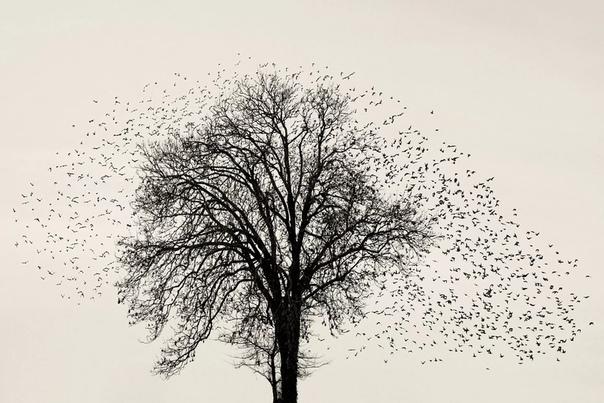 Серия снимков Blac Sun, начатая в 2017 году, документирует одно из самых завораживающих явлений природы Фотообъектив Сорена Солкера (Søren Solær) фиксирует причудливые облака стаи черных