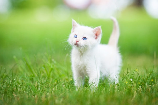 Скачать Обои Котиков