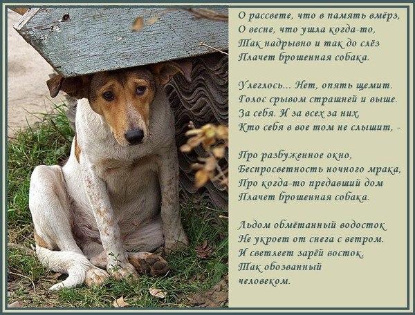 Стихи от лица животных